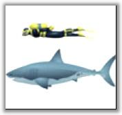 Подводный мир Кусто